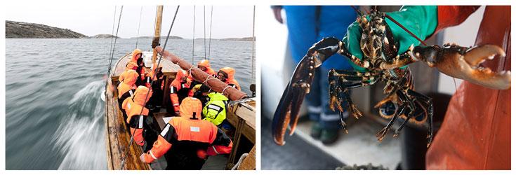 Schweden: Hummersafari in an der Küste von Bohuslän und Westschweden