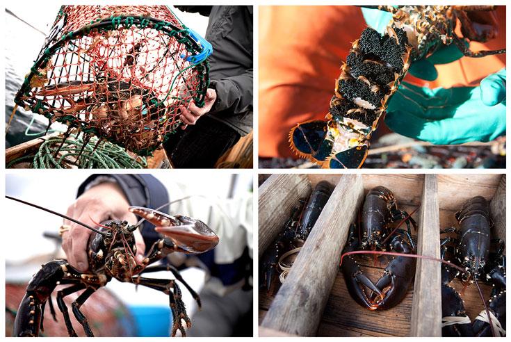 Schweden: Hummersafari und Schalentiererlebnisse in Westschweden und Bohuslän