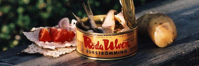 Surströmming in Schweden: Stinkender Konservenfisch