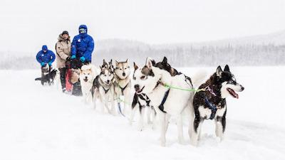 Hundeschlitten-Husky Tour_Nordschweden-Schwedisch Lappland-Västerbotten