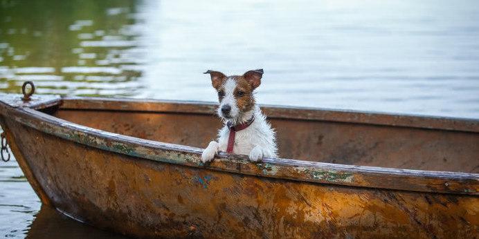 Suche nach Ferienhaus mit Hund in Schweden