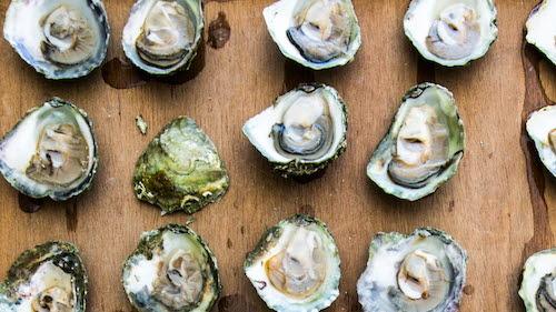 Austern aus Grebbestad von der Westküste Schwedens
